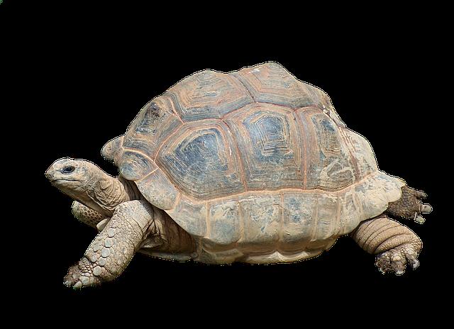 Anni delle tartarughe