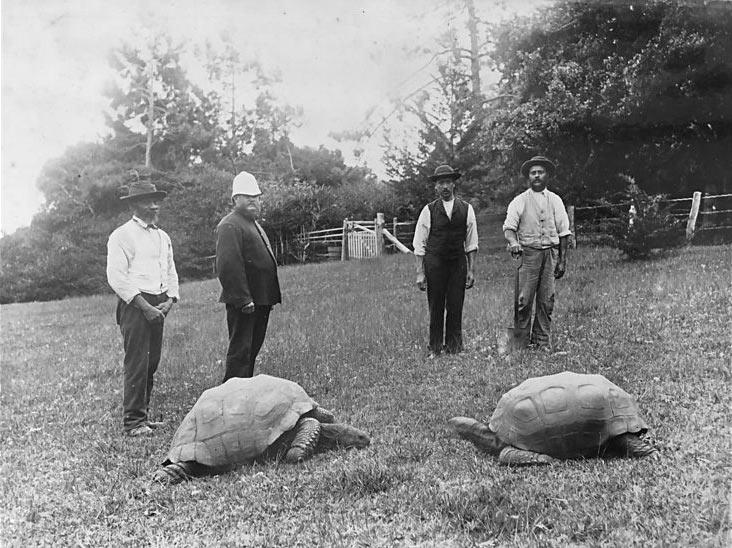 Jonthan la tartaruga da giovane