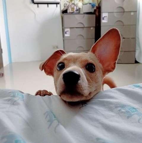 Il cane Chico