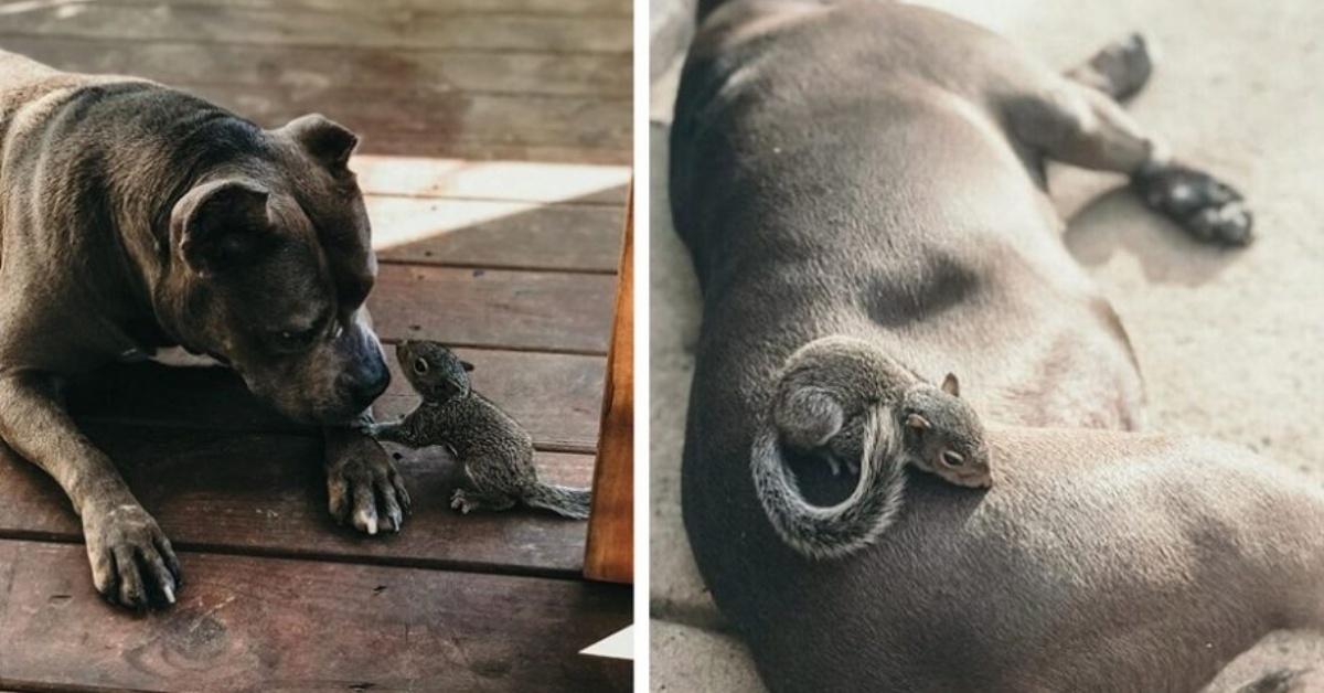 l'amicizia tra Every e lo scoiattolo