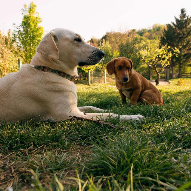 Due cani giocano
