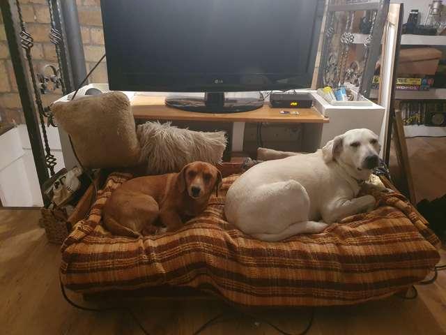 Cani adottano un fratellino