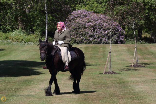 Lockdown e foto Regina Elisabetta