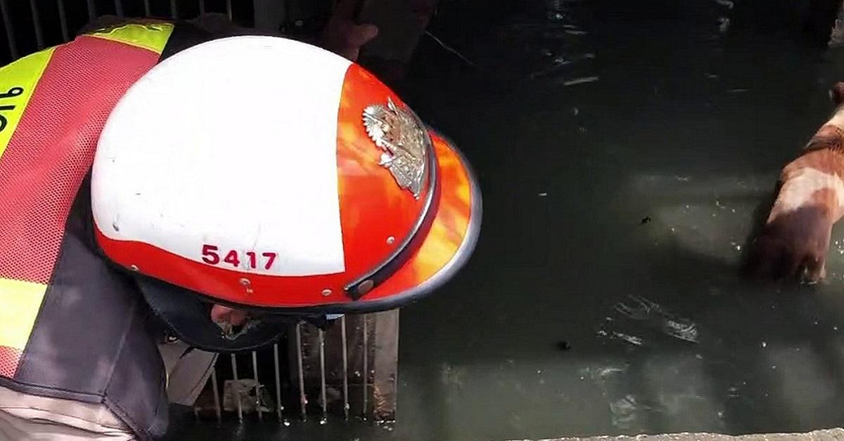 Polizia salva il cane che annega