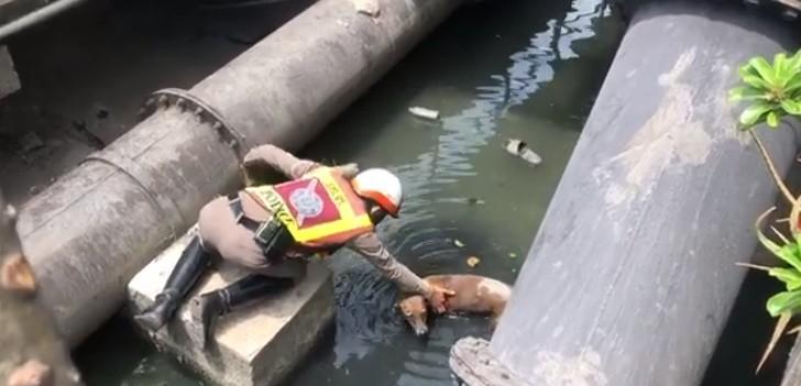 Cane soccorso in un canale