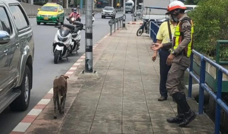 Agenti di polizia salvano cani randagi