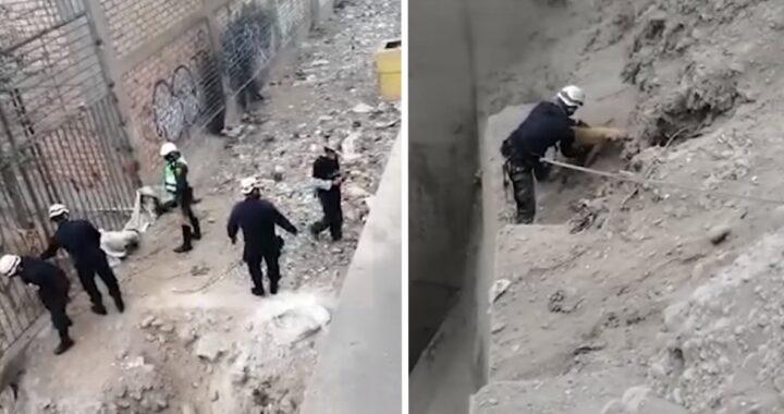 Poliziotti salvano un cane
