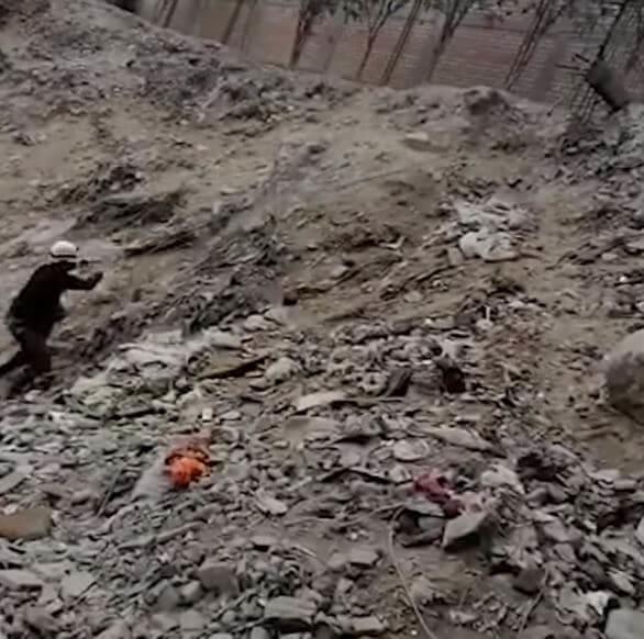 Cane randagio salvato dal fiume