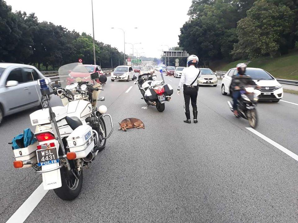 Cane ferito sulla highway