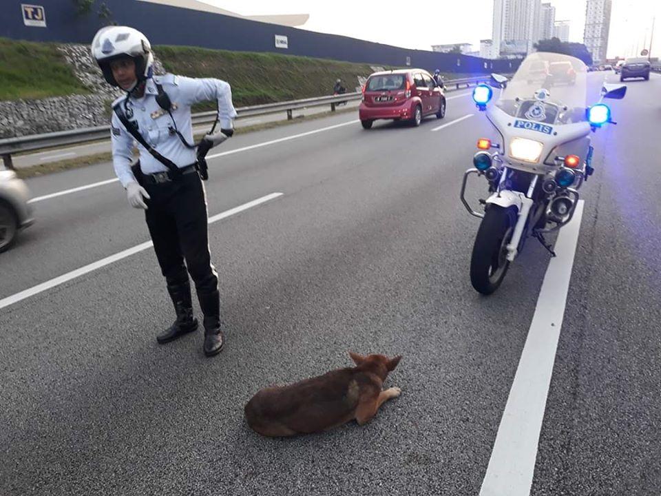 Royal Malaysia Police salva un cane