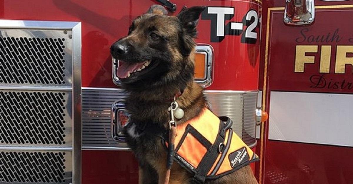 Il cane salvato dai pompieri
