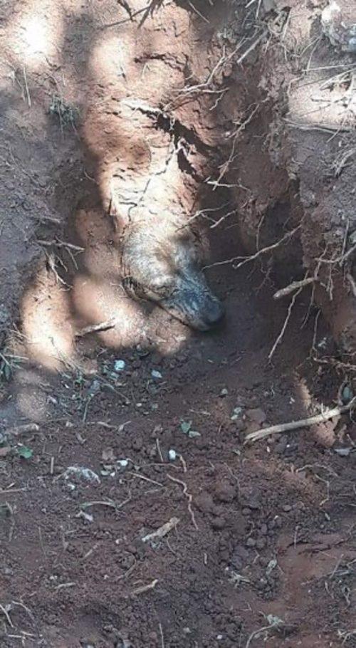 Cane sepolto dai detriti