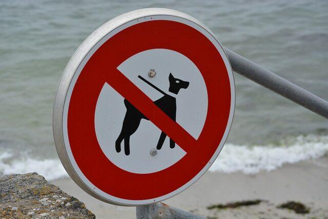 Vietato l'accesso alle spiagge per i cani