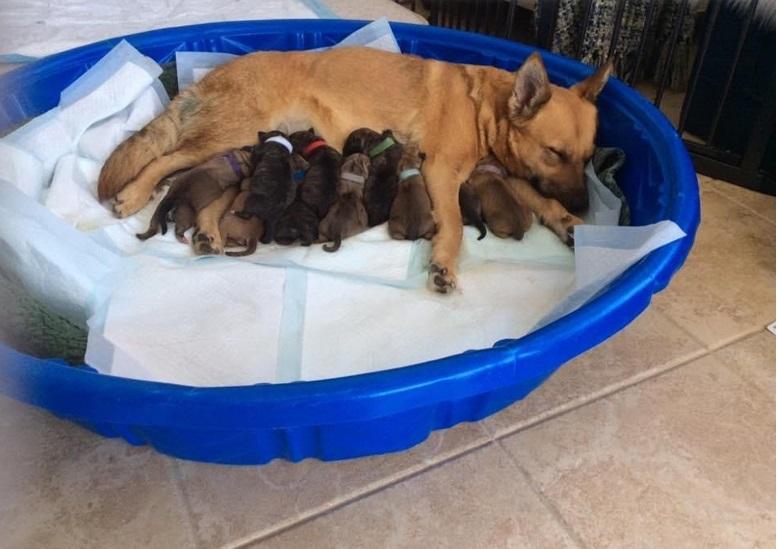 Cane dà alla luce i cuccioli