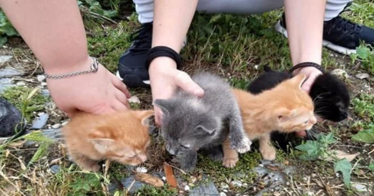 Gettato un sacco della spazzatura con 4 gattini