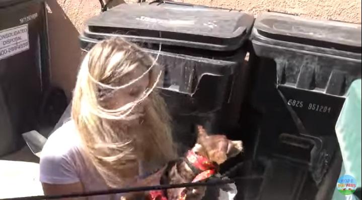 Volontario cattura il chihuahua