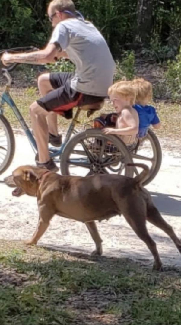 scomparso bimbo i cani lo hanno protetto
