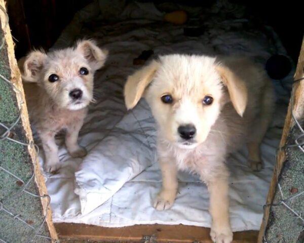 trovate 2 cucciole abbandonate