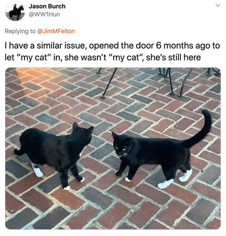 Gatti perfettamente uguali