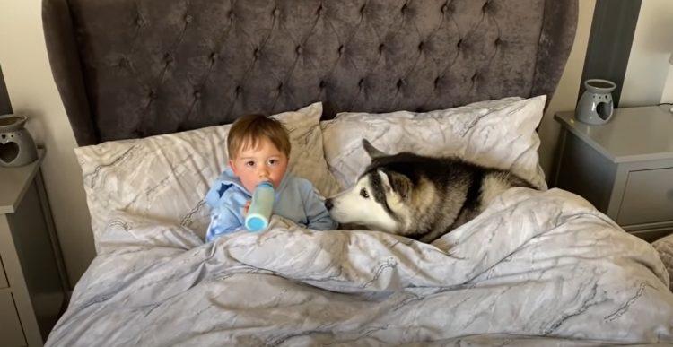 Cane e bambino sotto le coperte