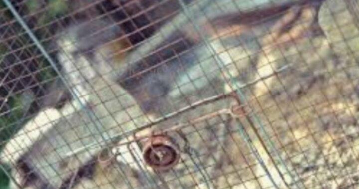 Gabbia per uccelli trovata fuori un rifugio