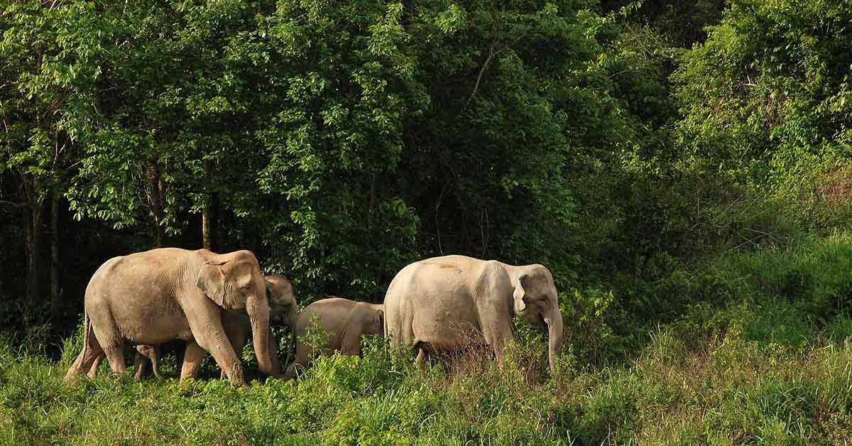 elefanti giungla