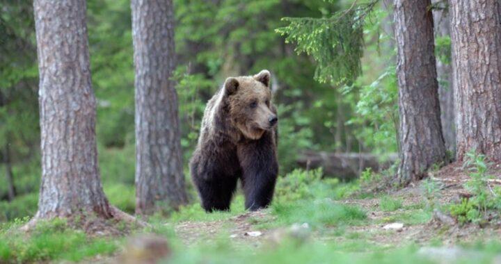Wwf e la petizione orso
