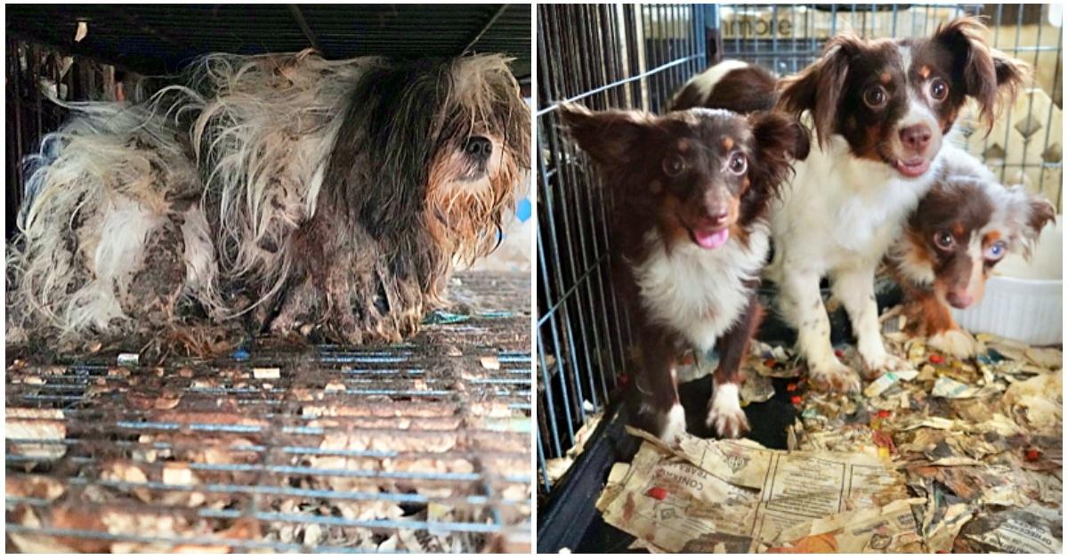 Trovati e curati 61 cani