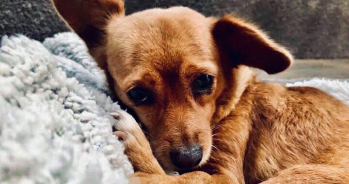Cane trovato a vegliare il corpo del suo proprietario: il racconto di Cécile
