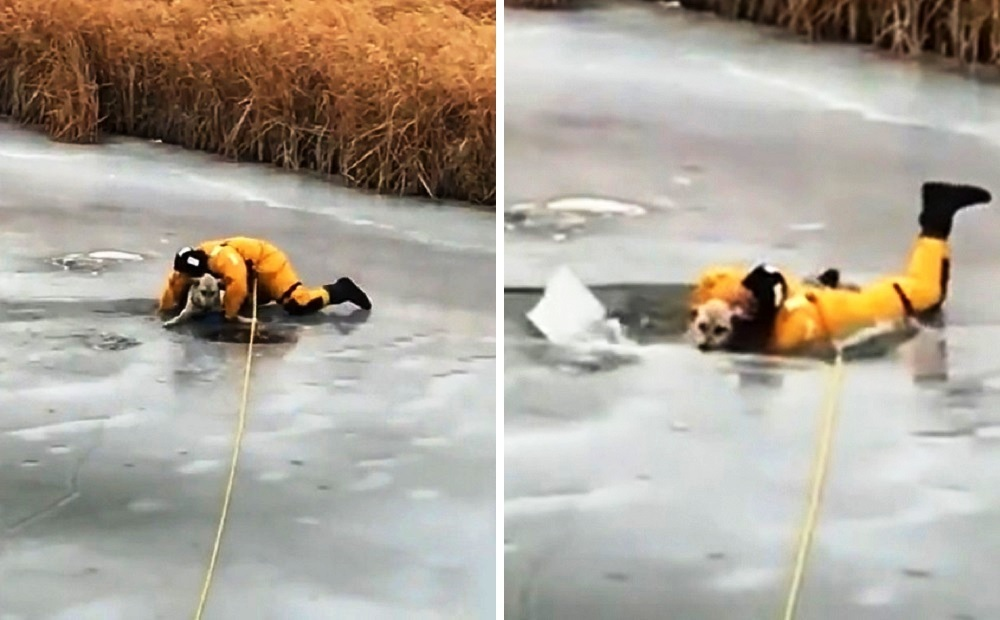Cane caduto nel fiume