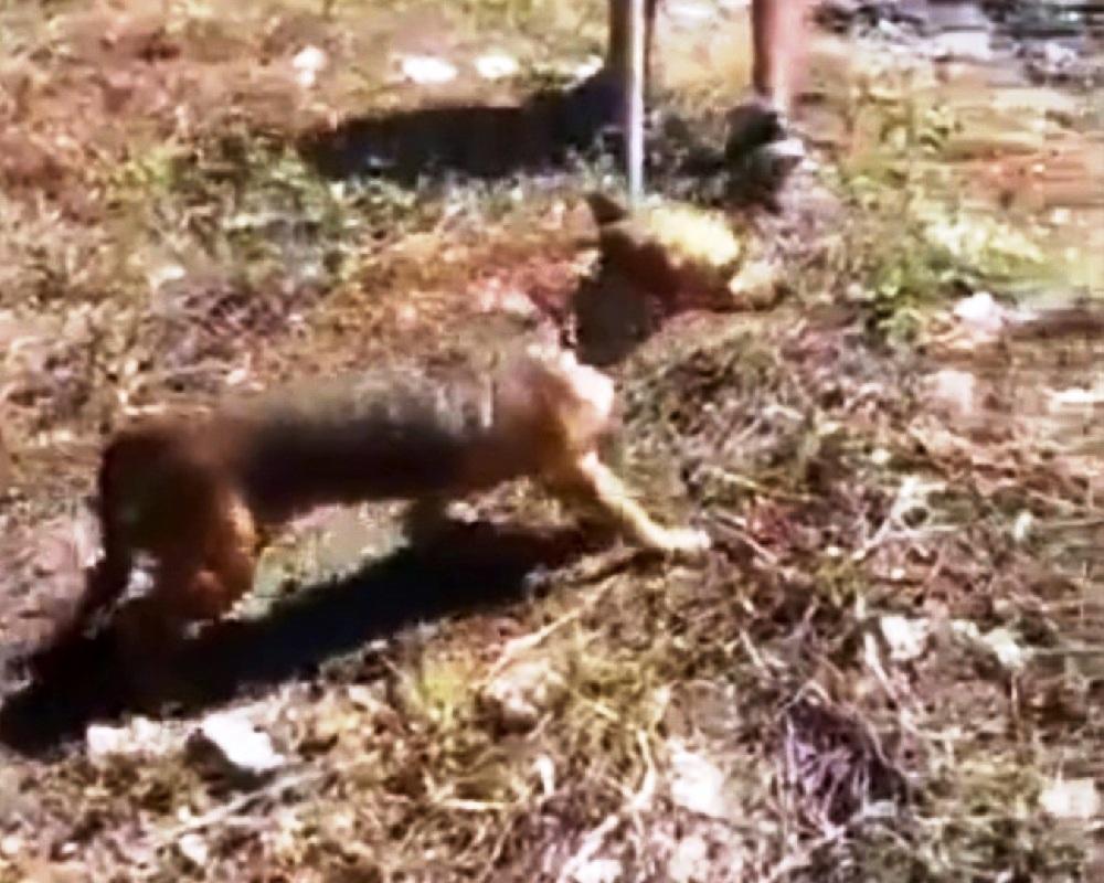 Il salvataggio del cane nel canale fognario