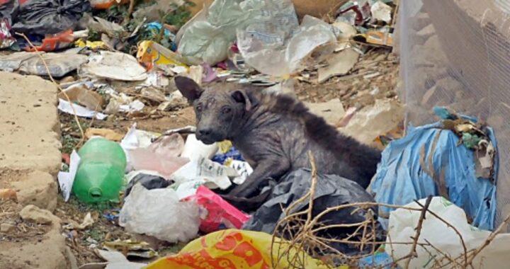 Crumb abbandonata dalla sua sua famiglia perché malata: ora è stata salvata