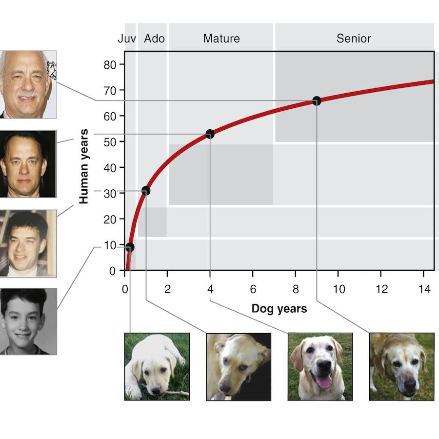 Come si calcola l'età del cane
