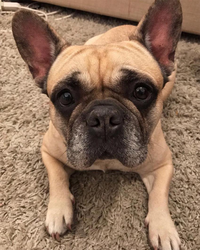 Il cane della Ferragni ha il tumore