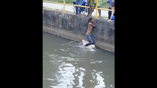 Ragazzo salva un cane