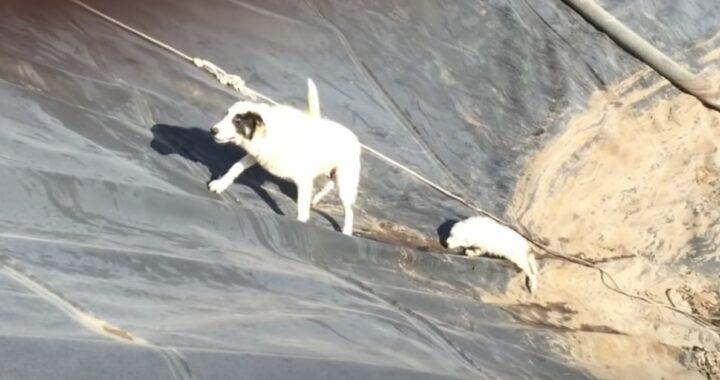 Il salvataggio di una cagna e del suo cucciolo