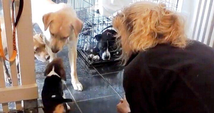 Serendipity e 2 cani