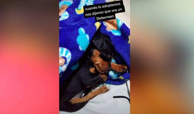 Il cucciolo di cane adottato