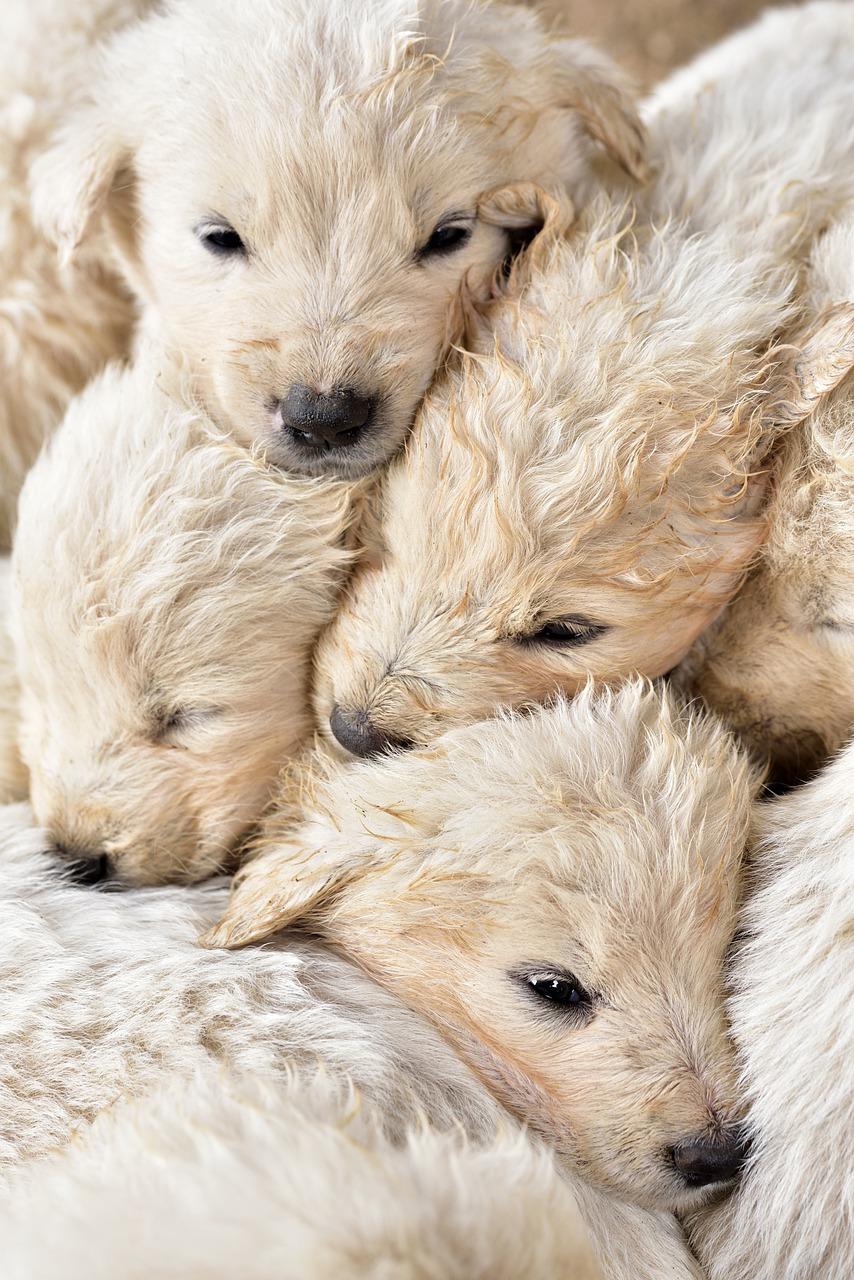 La cucciolata di 20 cuccioli