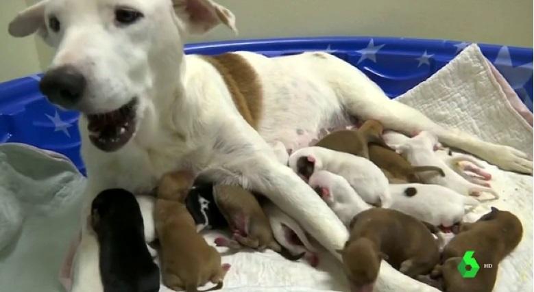 Cuccioli nati con il cesareo