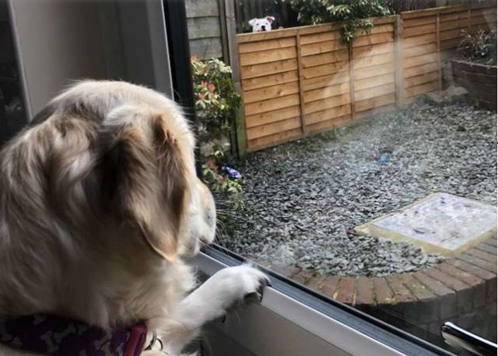 Lola guarda dalla finestra Loki