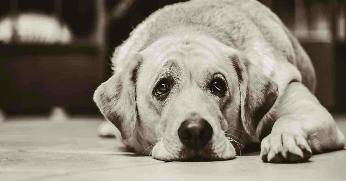 Cane abbandonato perché ha il cancro