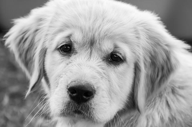 Theo il cane abbandonato