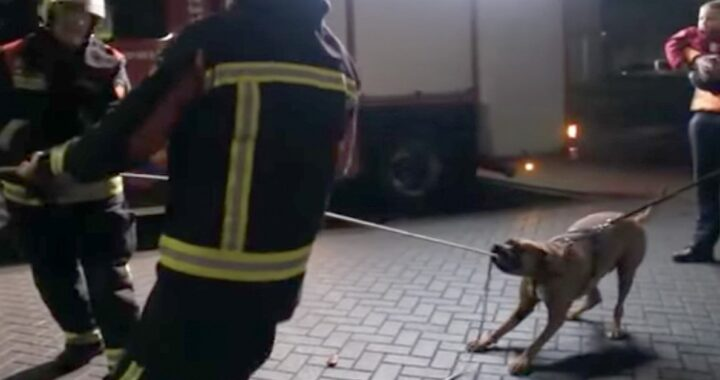 Cane aiuta i pompieri con la corda