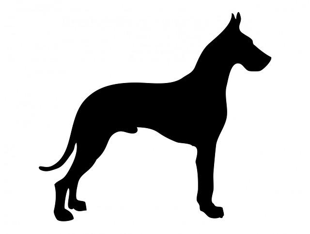 La grandezza di un cane danese