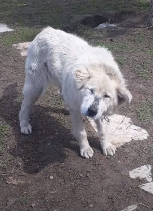 Salvata la cagnolina abbandonata