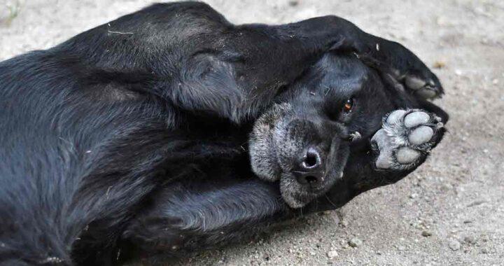 Cane bussa alla porta del veterinario per chiedere aiuto