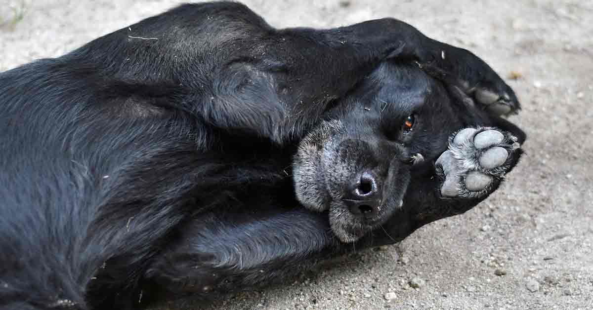 Cane bussa dal veterinario