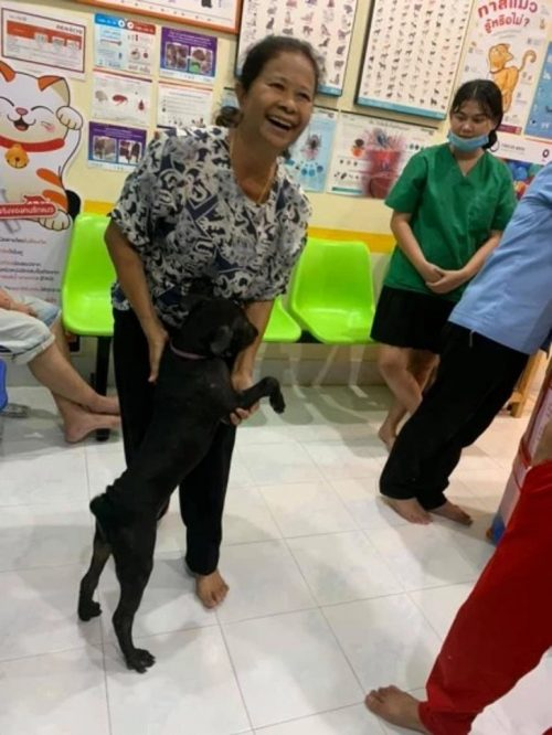 Il cane arriva sano dal veterinario