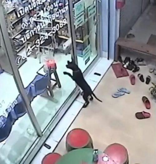 Bull Terrier dal veterinario
